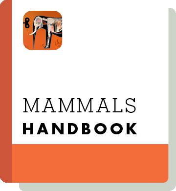 El09 Handbook Thumbnail En