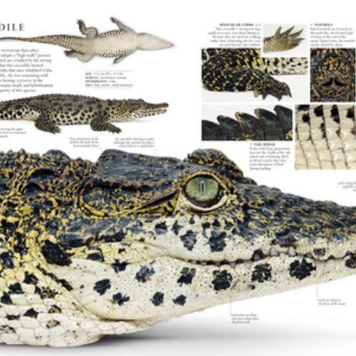 natural-history-smithsonian-thumbnail