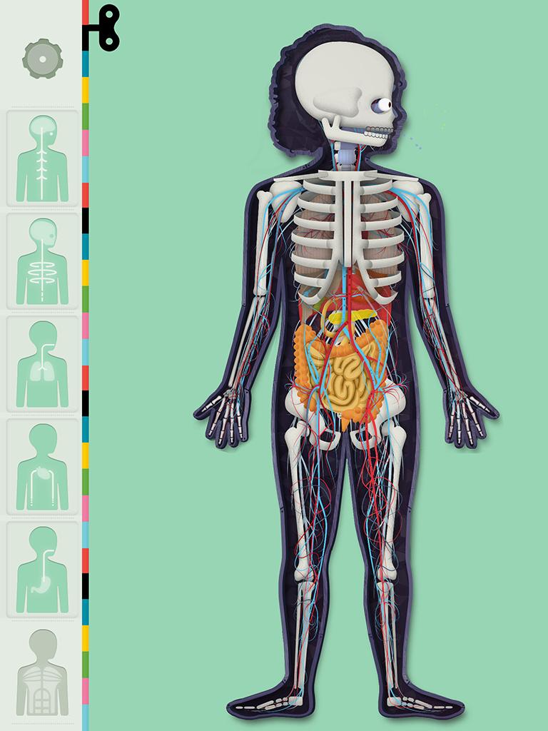 https://tinybop.com/img/posts/introducing-the-human-body/768X1024-humanbody-5.PNG