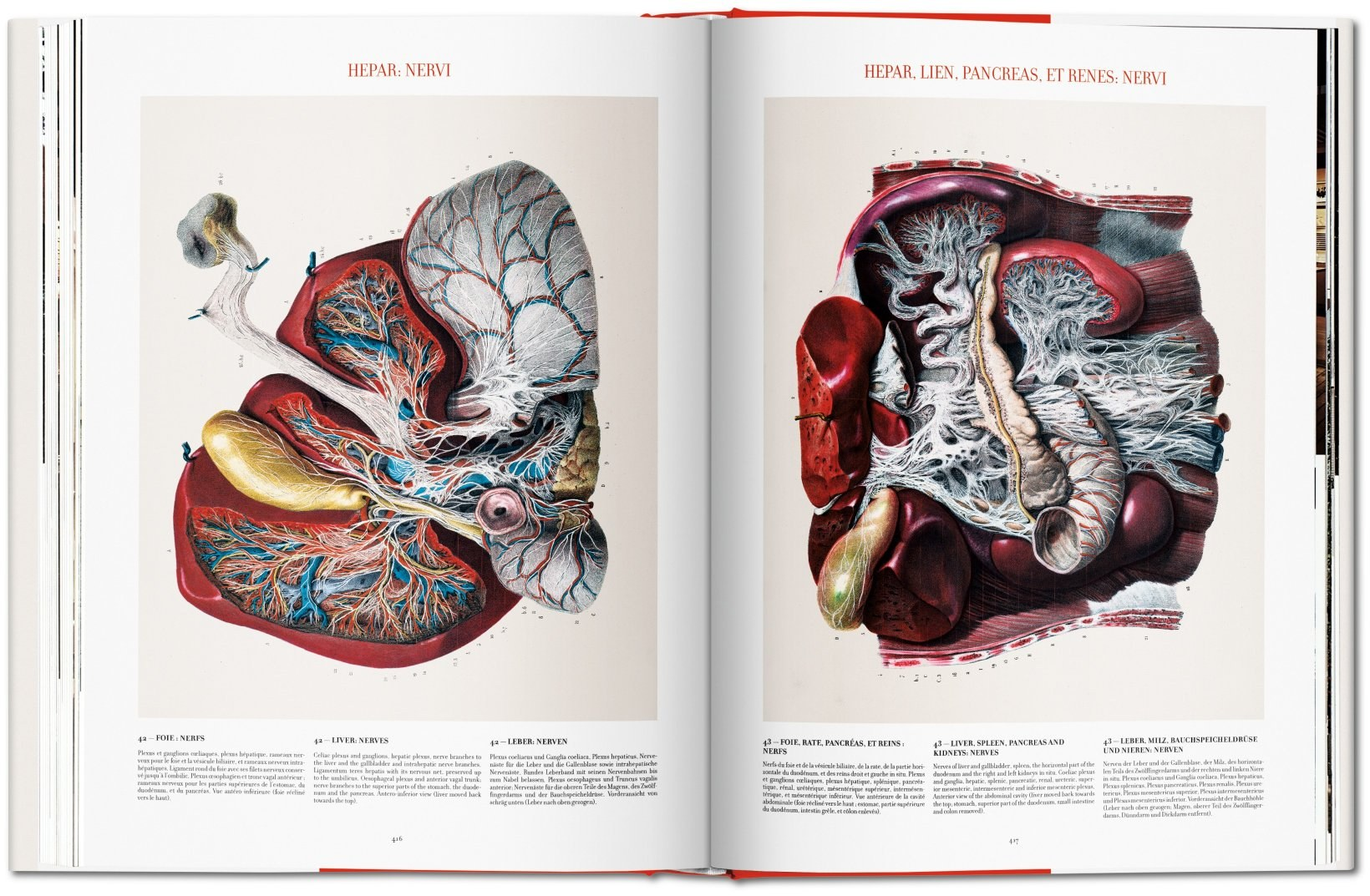 Atlas-of-Human-Anatomy-and-Surgery